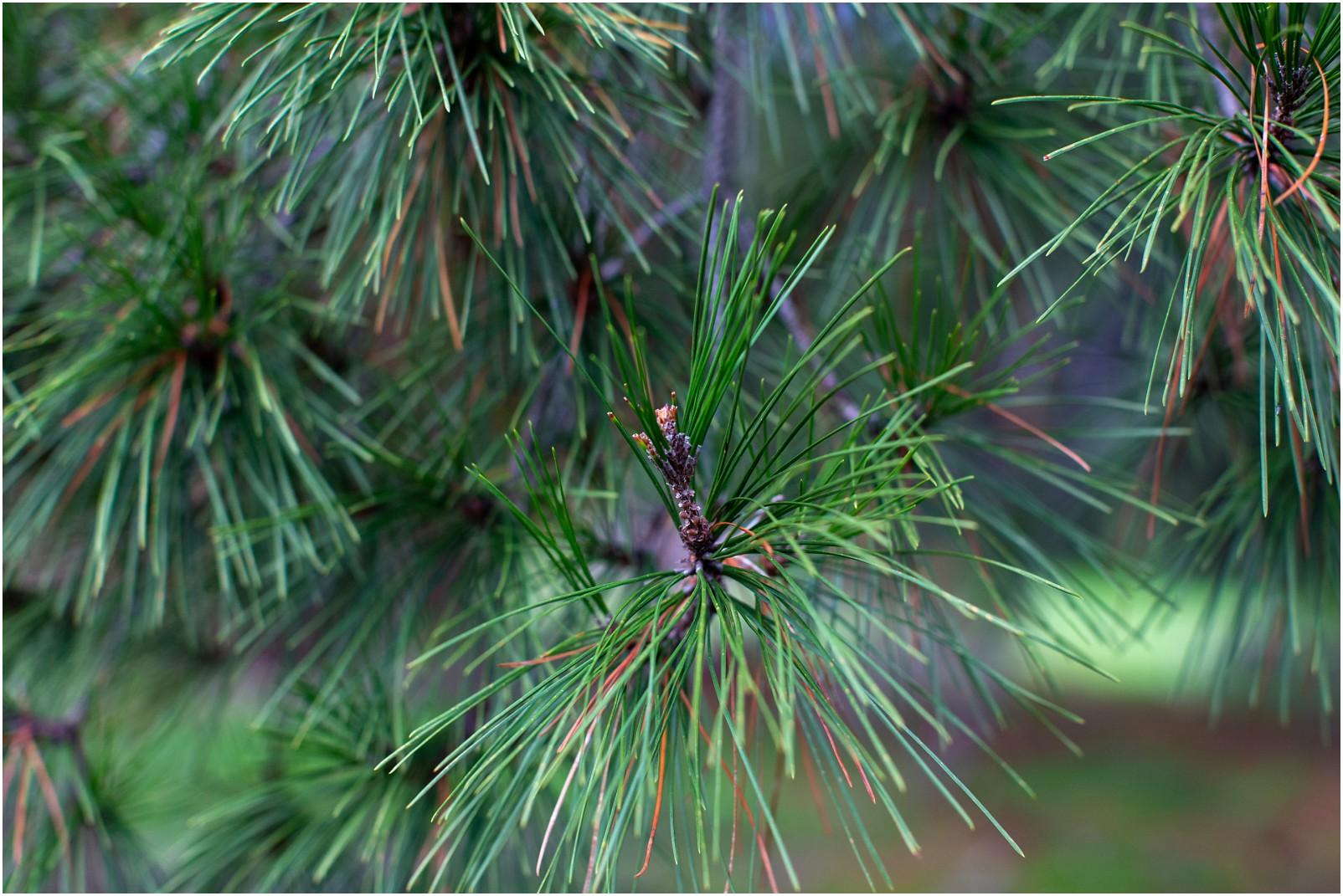 Mimosa Botanicals Brand Photography_0027