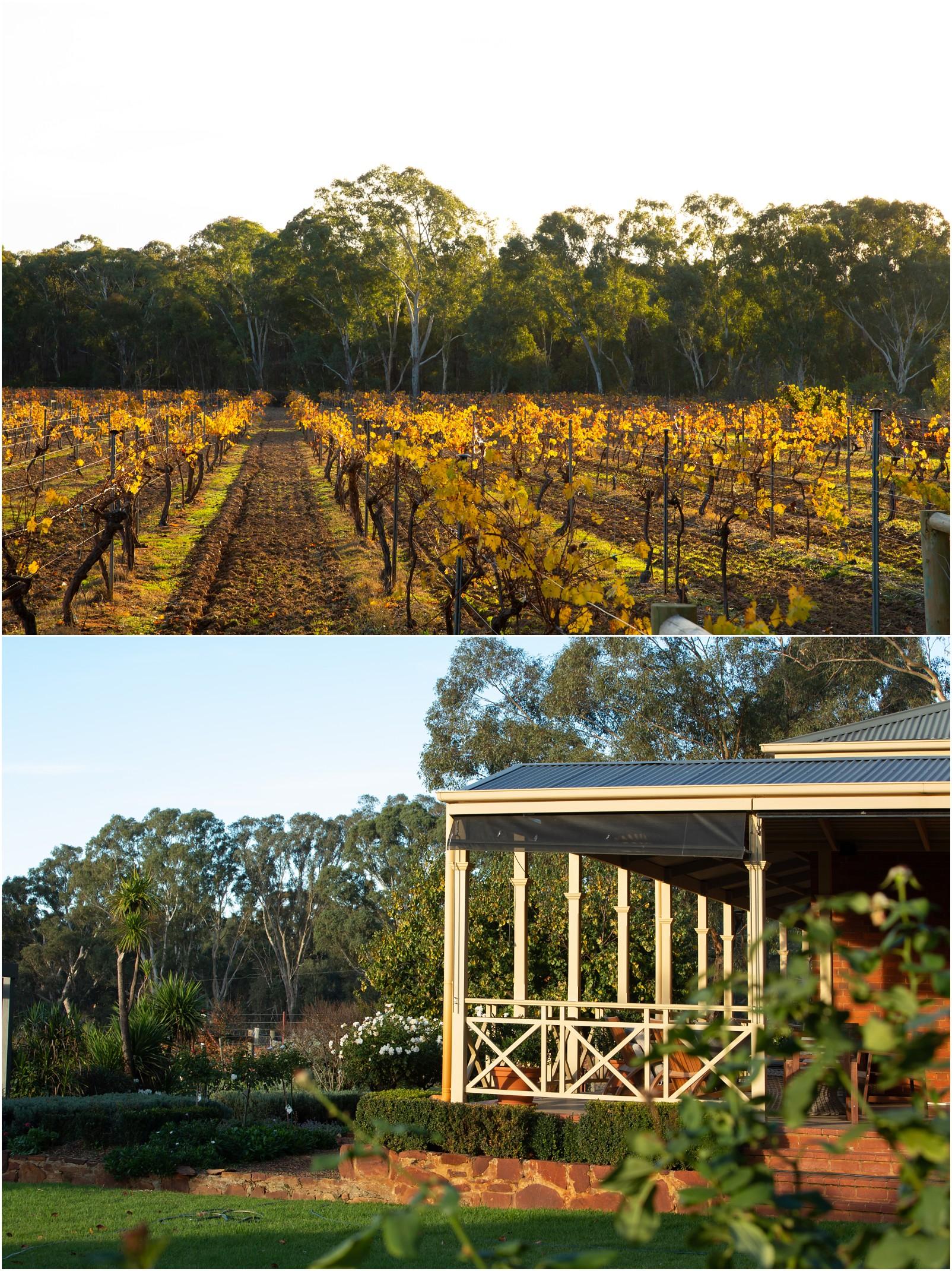 Byronsvale vineyard and accommadation_0002